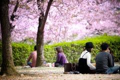 Picnic sotto i fiori di ciliegia degli alberi di Sakura fotografie stock libere da diritti