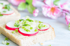 Picnic spring food sandwiches with raw radish and chives. Closeup Stock Image