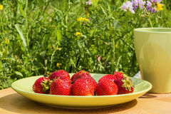 Picnic in the summer garden on a sunny day Royalty Free Stock Images
