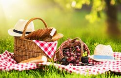 Picnic on a Sunny Day. With Red Grapes and Wine stock photos