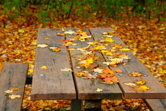 Picnic table. The view of yellow leaves on the picnic table Royalty Free Stock Images
