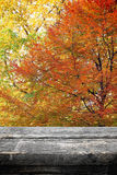 Picnic table on autumn Stock Photo
