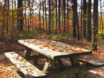Picnic table in Autumn forest Stock Photo