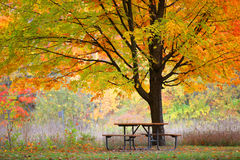 Picnic table and autumn tree Stock Photo