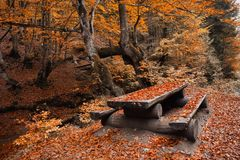 Picnic table in a beautiful autumn park Stock Image