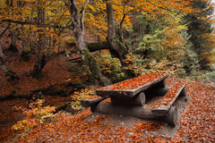 Picnic table in a beautiful autumn park Stock Images