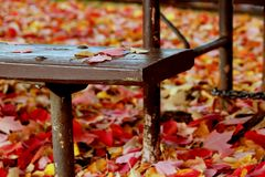 Picnic table bench and fallen leaves. Fallen red and gold tree leaves that have collected around and underneath a picnic table in a public park signal the Royalty Free Stock Photos