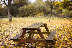 Picnic table in colourful autumn forest. A big picnic table in a UK forest in Autumn Stock Image