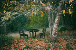 Picnic Table. Empty wooden picnic table and benches in the woods in the Fall Royalty Free Stock Photos