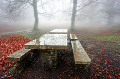 Picnic table in foggy forest Royalty Free Stock Photo