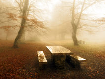 Picnic table in foggy forest Stock Photos