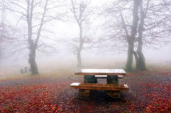 Picnic table in foggy forest Royalty Free Stock Image