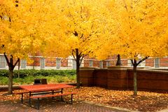Picnic table and golden leaves Stock Images