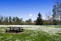 Picnic table in the grass filled with white daisies. Picnic table in a field of white daisies near the river Royalty Free Stock Photography