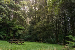 Picnic table in Lush green foggy forest. Mystical picnic spot within forest clearing surrounded by lush rain forest with picnic tables and fog in the background Stock Image