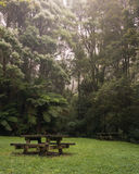 Picnic table in Lush green foggy forest. Mystical picnic spot within forest clearing surrounded by lush rain forest with picnic tables and fog in the background Stock Photography