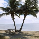 Picnic table with palm trees Stock Images