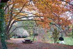 Picnic table in park in autumn / fall. Picnic table under a tree in a park in autumn / fall season royalty free stock photography