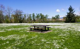 Picnic table in the park with white daisies. Picnic table in a field of white daisies near the river Royalty Free Stock Images