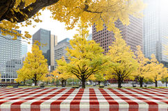 Picnic table in the park with yellow Ginko Leaves in autumn. Stock Photo