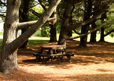 Picnic Table Among Pines Royalty Free Stock Images