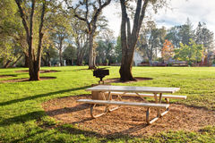 Picnic table in public park. Picnic table and barbecue pit in a public community park Royalty Free Stock Photography