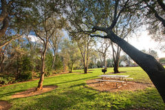 Picnic table in public park. Picnic table, green grass and oak trees in a public park Royalty Free Stock Photography
