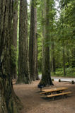 Picnic table redwood forest park vertical Stock Photo