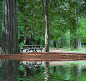 Picnic Table in Redwood Forest Royalty Free Stock Photography