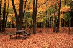 Picnic Table on Rib Mountain State Park, WI. Picnic table nestled in fallen autumn leaves atop Rib Mountain, WI. Background of brilliant golden maple trees Royalty Free Stock Photo