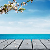 Picnic table and sea. Picnic table near sea with cherry branch Royalty Free Stock Images