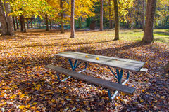 Picnic table in the shadow of tree in park. Picnic table in the shadow of trees in autumn park Stock Photo