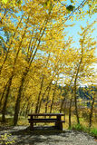 Picnic table under autumn foliage Stock Images