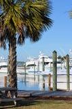 Picnic Table Palmtree Marina Yachts Stock Photos