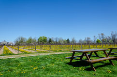 Picnic table in vineyard Royalty Free Stock Image