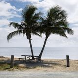 Picnic Table With Palm Trees Royalty Free Stock Image
