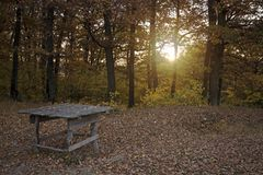Picnic table in woods Royalty Free Stock Images