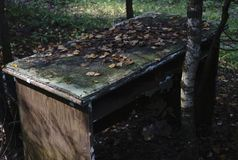 Picnic table in woods on the dark one. Stock Images