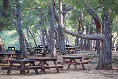 Picnic Tables Stock Image