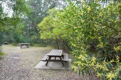Picnic tables and benches on picnic area in the park stock photo