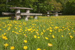 Picnic tables in blooming meadow Royalty Free Stock Photo