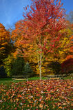 Picnic Tables, Fall Colors. Two picnic tables surrounded by beautiful fall colors.  Red, orange, yellow green leaves, blue sky and a lawn full of fall leaves Stock Images