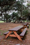 Picnic tables under hanging spanish moss and live oaks Royalty Free Stock Photo