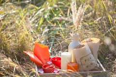 Picnic - tea and cookies Stock Image