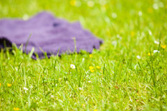 Picnic. Violet blanket on the green grass of meadow Royalty Free Stock Photography