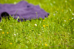 Picnic. Violet blanket on the green grass of meadow Stock Photography