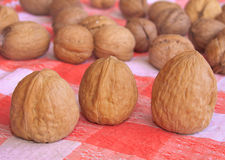 Picnic walnuts Royalty Free Stock Images