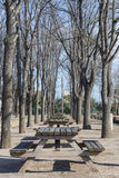 Picnic. Wooden tables lined up on a picnic stock photography