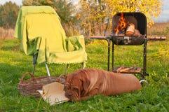 picnicing的狗 库存照片