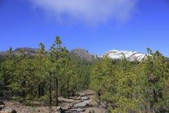 Pico de montaña Nevado rodeado por los árboles de pino foto de archivo libre de regalías